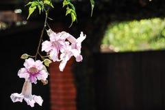 Flores hermosas de la orquídea con el fondo borroso Fotografía de archivo