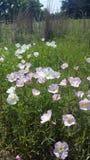 ¡Flores hermosas de la primavera! Fotografía de archivo