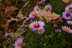 Flores hermosas de la primavera fotos de archivo