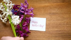 Flores hermosas de la primavera del jacinto con la enhorabuena para la mamá