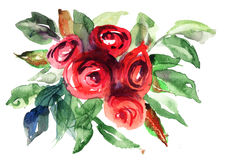Flores hermosas de las rosas Fotos de archivo