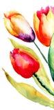 Flores hermosas de los tulipanes Imagen de archivo libre de regalías