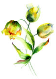 Flores hermosas de los tulipanes Fotos de archivo libres de regalías