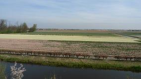 Flores hermosas de Países Bajos en primavera foto de archivo