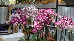 Flores hermosas de Países Bajos en primavera imagen de archivo libre de regalías