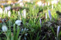 Flores hermosas de una primavera en nuestro jardín Fotografía de archivo libre de regalías