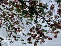 Flores hermosas del árbol en la playa imagen de archivo libre de regalías