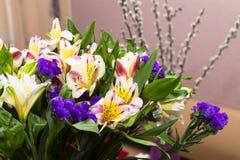 Flores hermosas del Alstroemeria y x28; Lirio peruano o lirio del inc. fotografía de archivo libre de regalías