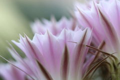 Flores hermosas del cactus Imágenes de archivo libres de regalías