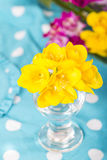 Flores hermosas del cierre de la fresia para arriba Foto de archivo