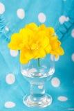 Flores hermosas del cierre de la fresia para arriba Foto de archivo libre de regalías