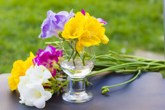Flores hermosas del cierre de la fresia para arriba Fotos de archivo