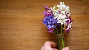 Flores hermosas del color de la primavera diversas del jacinto