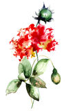 Flores hermosas del Hydrangea Fotografía de archivo libre de regalías