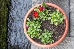 Flores hermosas del invierno en pote plano redondo imagen de archivo
