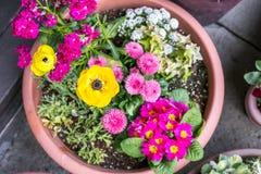 Flores hermosas del invierno en pote plano redondo imagen de archivo libre de regalías