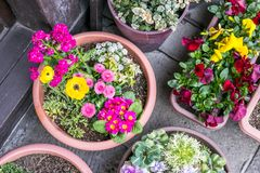 Flores hermosas del invierno en pote plano redondo imágenes de archivo libres de regalías