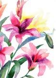 Flores hermosas del lirio Fotografía de archivo