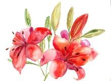 Flores hermosas del lirio Fotografía de archivo libre de regalías