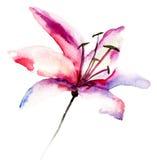 Flores hermosas del lirio Foto de archivo libre de regalías