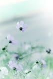 Flores hermosas del pastel de la oferta de la falta de definición del defocus fotos de archivo