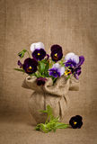 Flores hermosas del pensamiento fotografía de archivo libre de regalías