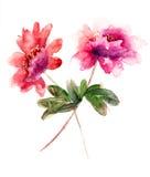 Flores hermosas del peony Fotografía de archivo libre de regalías