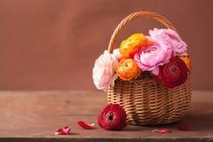 Flores hermosas del ranúnculo en cesta fotografía de archivo libre de regalías