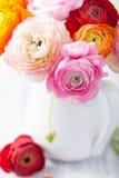 Flores hermosas del ranúnculo en florero imagenes de archivo