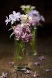 Flores hermosas del resorte Imagenes de archivo