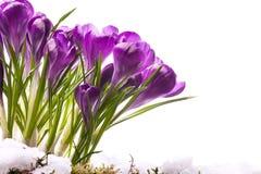 Flores hermosas del resorte del arte Fotografía de archivo libre de regalías