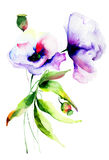 Flores hermosas del verano Fotos de archivo libres de regalías