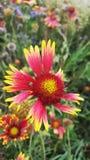Flores hermosas del verano Fotografía de archivo