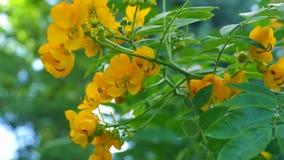 Flores hermosas en amarillo en un fondo del lago Imagenes de archivo