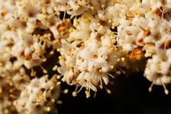 Flores hermosas en blanco Fotos de archivo