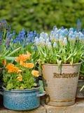 Flores hermosas en crisoles de la cubierta de la hoja Imagen de archivo libre de regalías