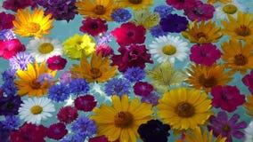 Flores hermosas en el agua almacen de video
