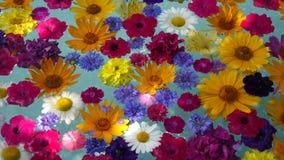 Flores hermosas en el agua almacen de metraje de vídeo