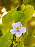Flores hermosas en el amanecer Foto de archivo libre de regalías