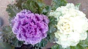 Flores hermosas en el color blanco y azul Fotos de archivo