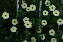Flores hermosas en el jardín Imagen de archivo