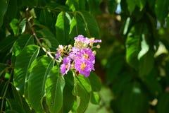 Flores hermosas en el jardín Imagen de archivo libre de regalías