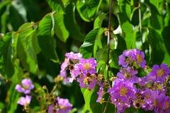 Flores hermosas en el jardín Imagenes de archivo