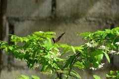 Flores hermosas en el jardín Foto de archivo