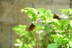 Flores hermosas en el jardín Fotografía de archivo libre de regalías