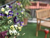 Flores hermosas en el jardín Fotos de archivo
