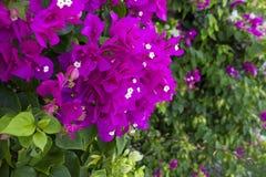 Flores hermosas en el jardín Foto de archivo libre de regalías