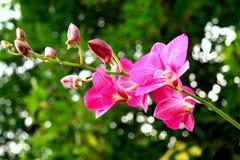 Flores hermosas en el jardín Imágenes de archivo libres de regalías