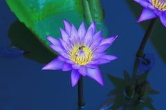Flores hermosas en el jardín Fotos de archivo libres de regalías