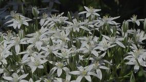 Flores hermosas en el jardín durante el día de verano almacen de video
